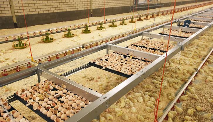 X-Treck Onfarm Hatching